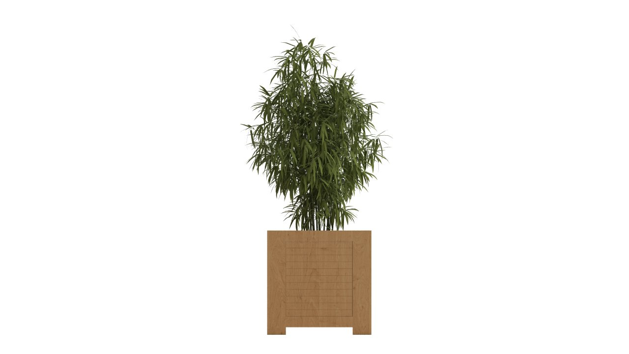Bamboo in large wooden pot