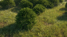 Generic high poly bush model
