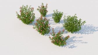 Weigela bush plant