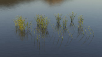 Water reed