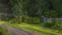 Forest shrubs