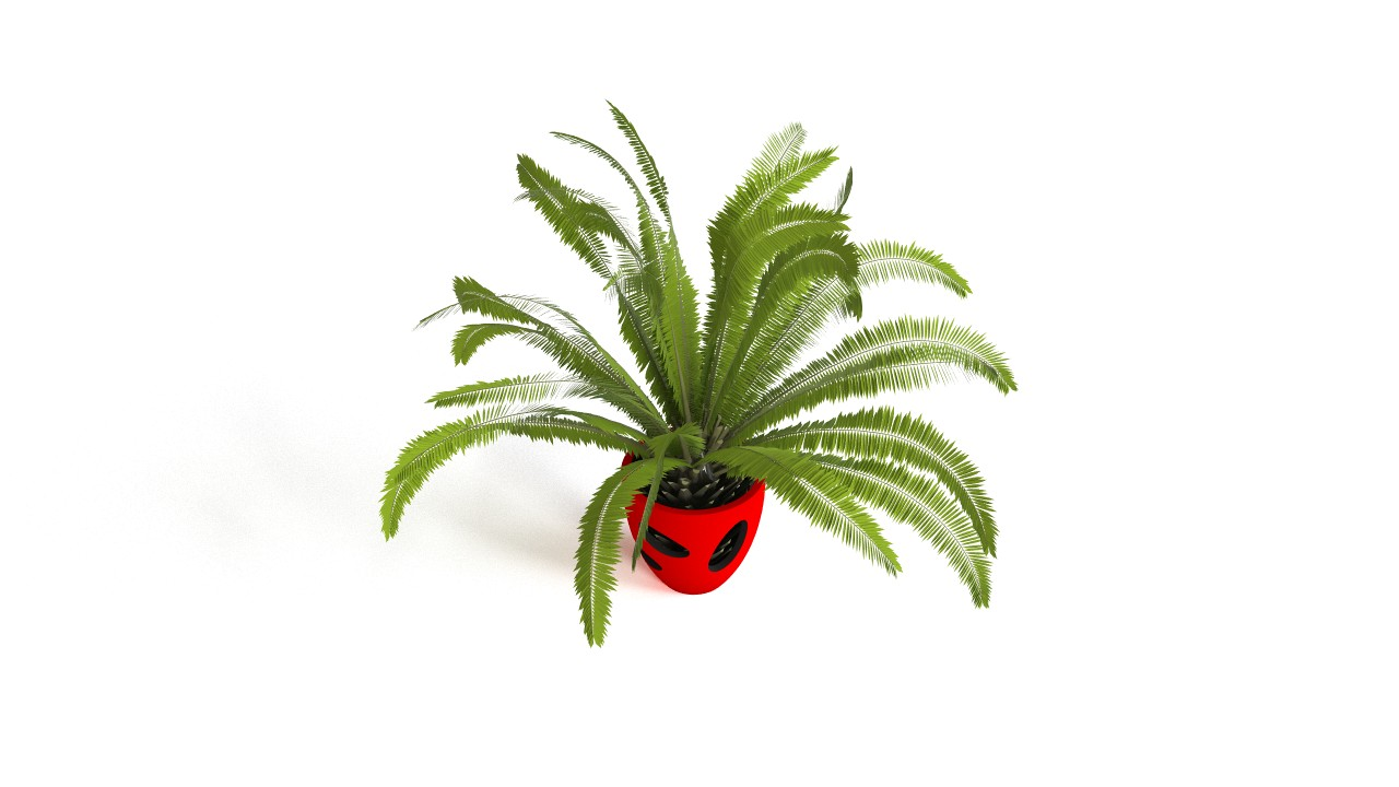 Vase Serralunga with Phoenix canariensis palm