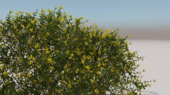 Desert shrubs