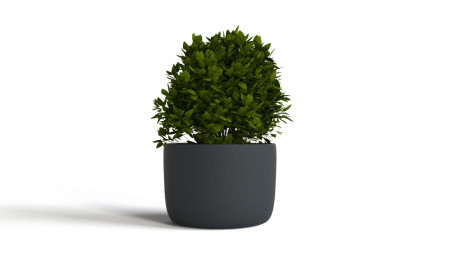 Bush in a little pot