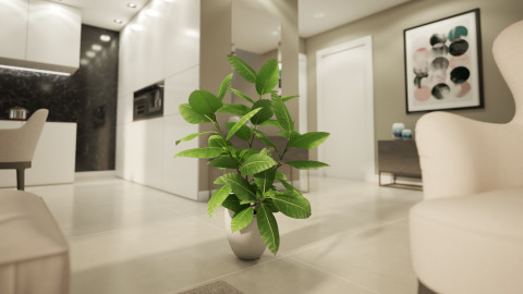 Ficus Elastica Interior plant