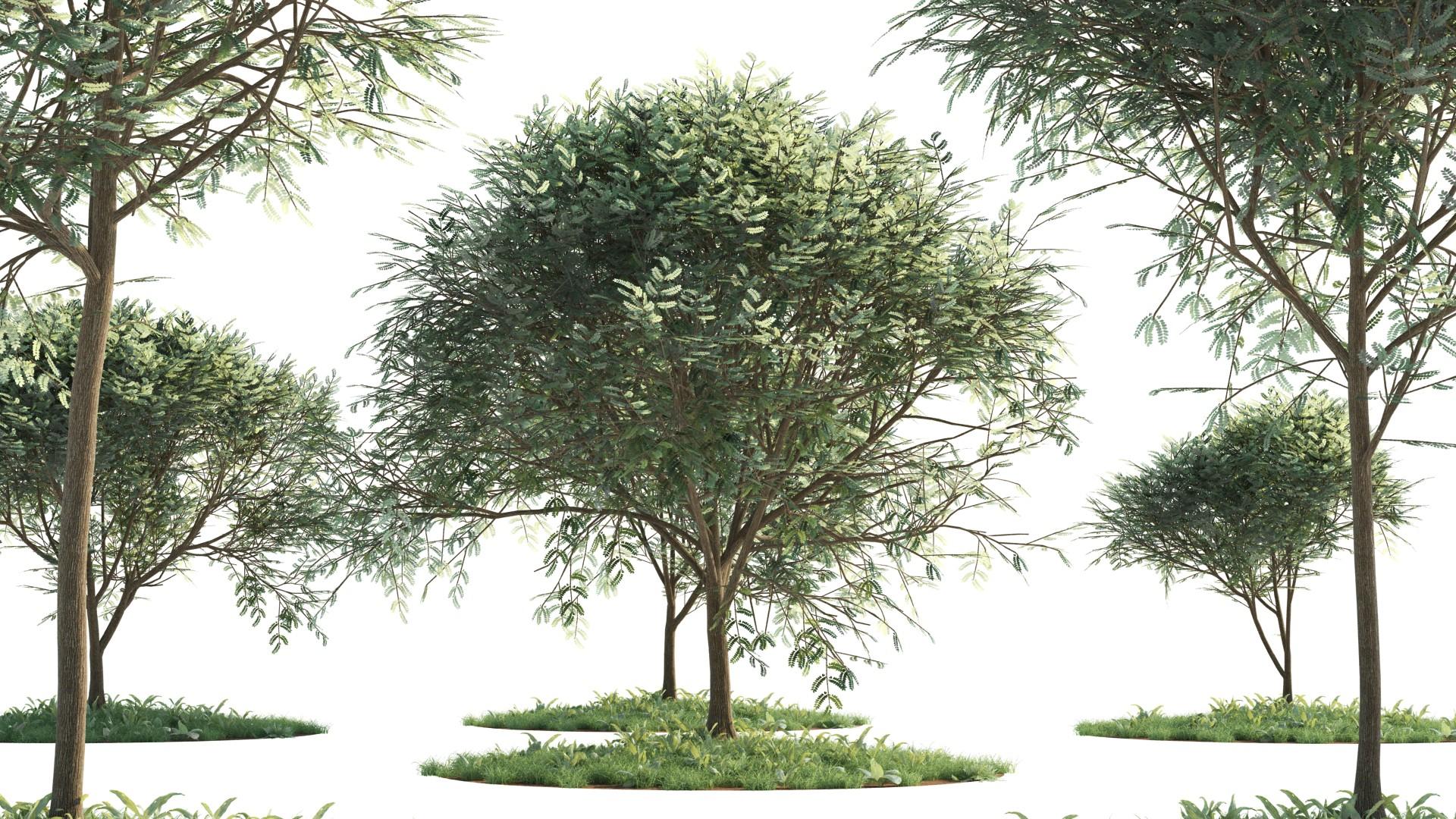 Low-Poly Acacia Trees