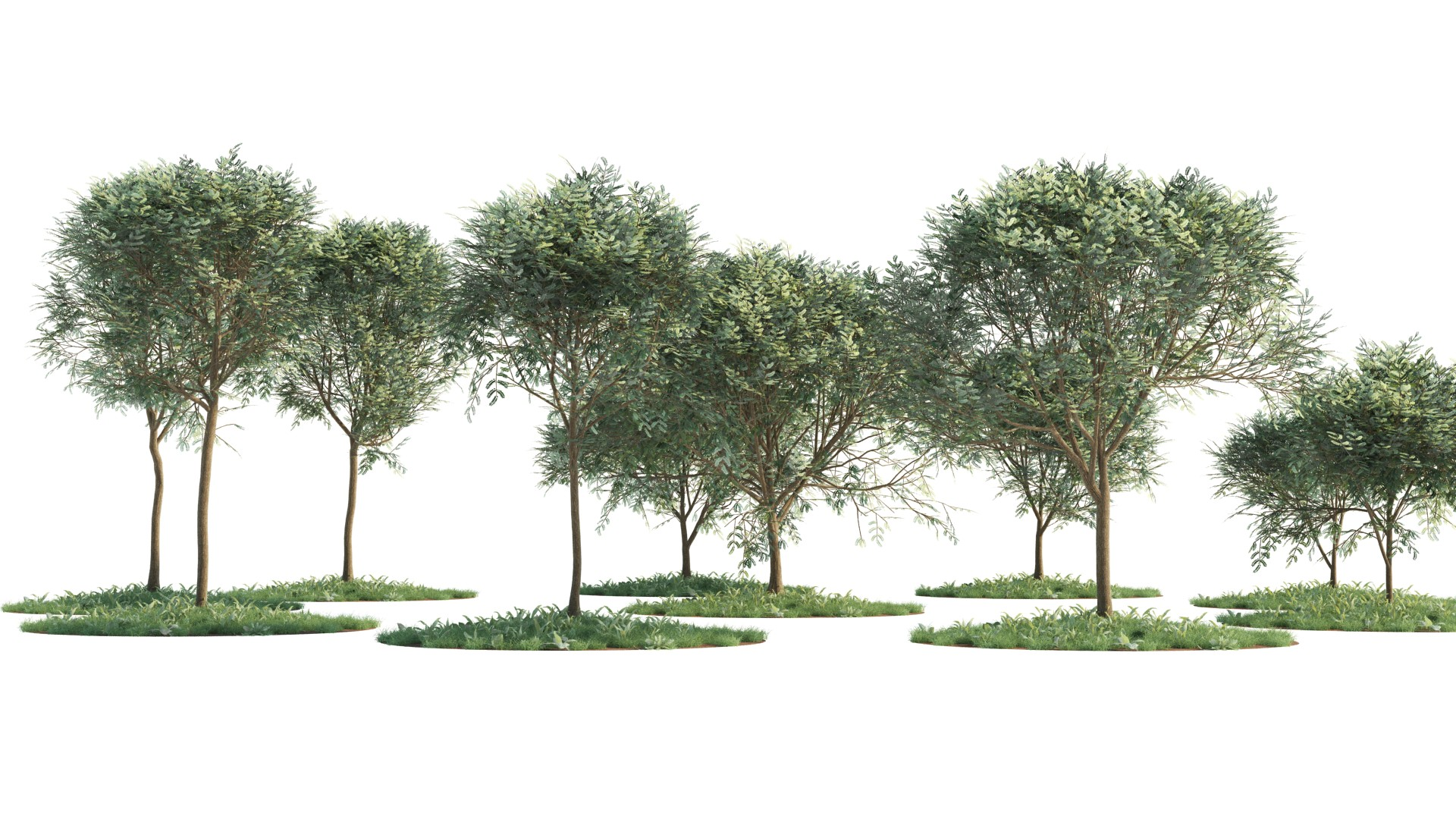 Low-Poly Acacia Trees | FlyingArchitecture