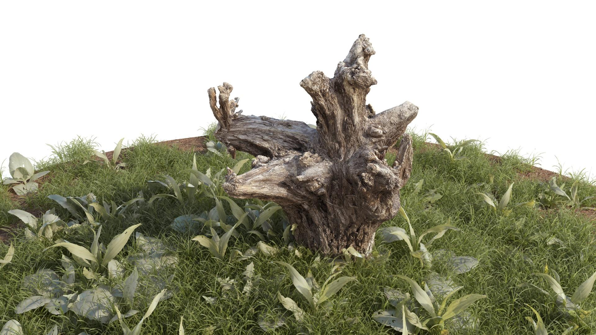 Rough Stump 01