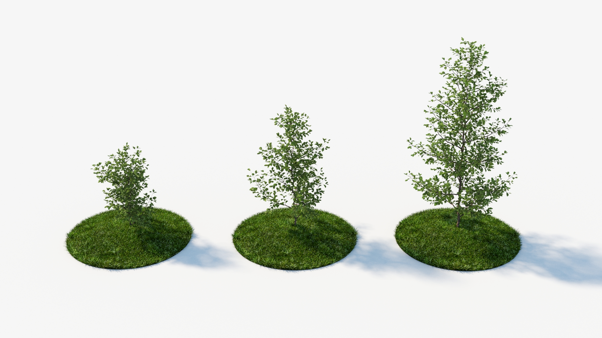 Generic bushes and low trees