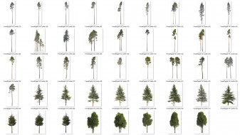 forest/digital Trees vol. 4 - Conifers