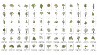 forest/digital Trees vol. 2 - Spring trees