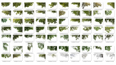 ForestDigital vol. 3 - Corner trees