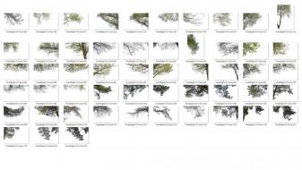 ForestDigital vol. 3 - Corner trees