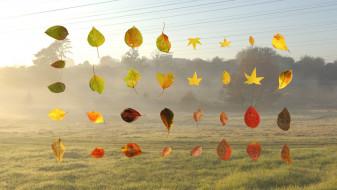 Fallen Autumn Leaves